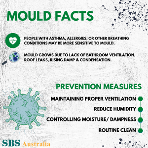 Mold and Prevention Measures